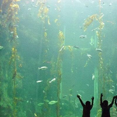 Los 5 mejores acuarios
