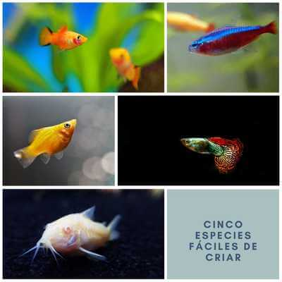 Cinco peces para principiantes