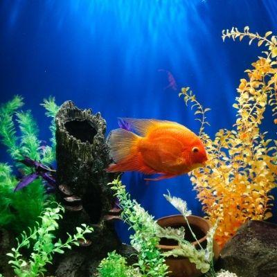 PH del agua. ¿Por qué es importante para tu acuario?